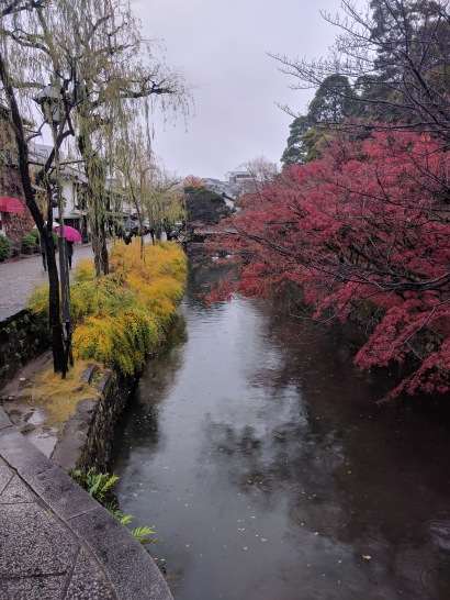 Canal and foliage in rain